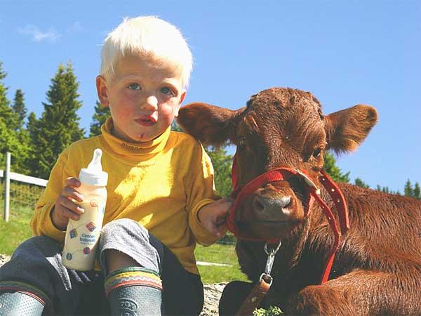 Lars og kalven